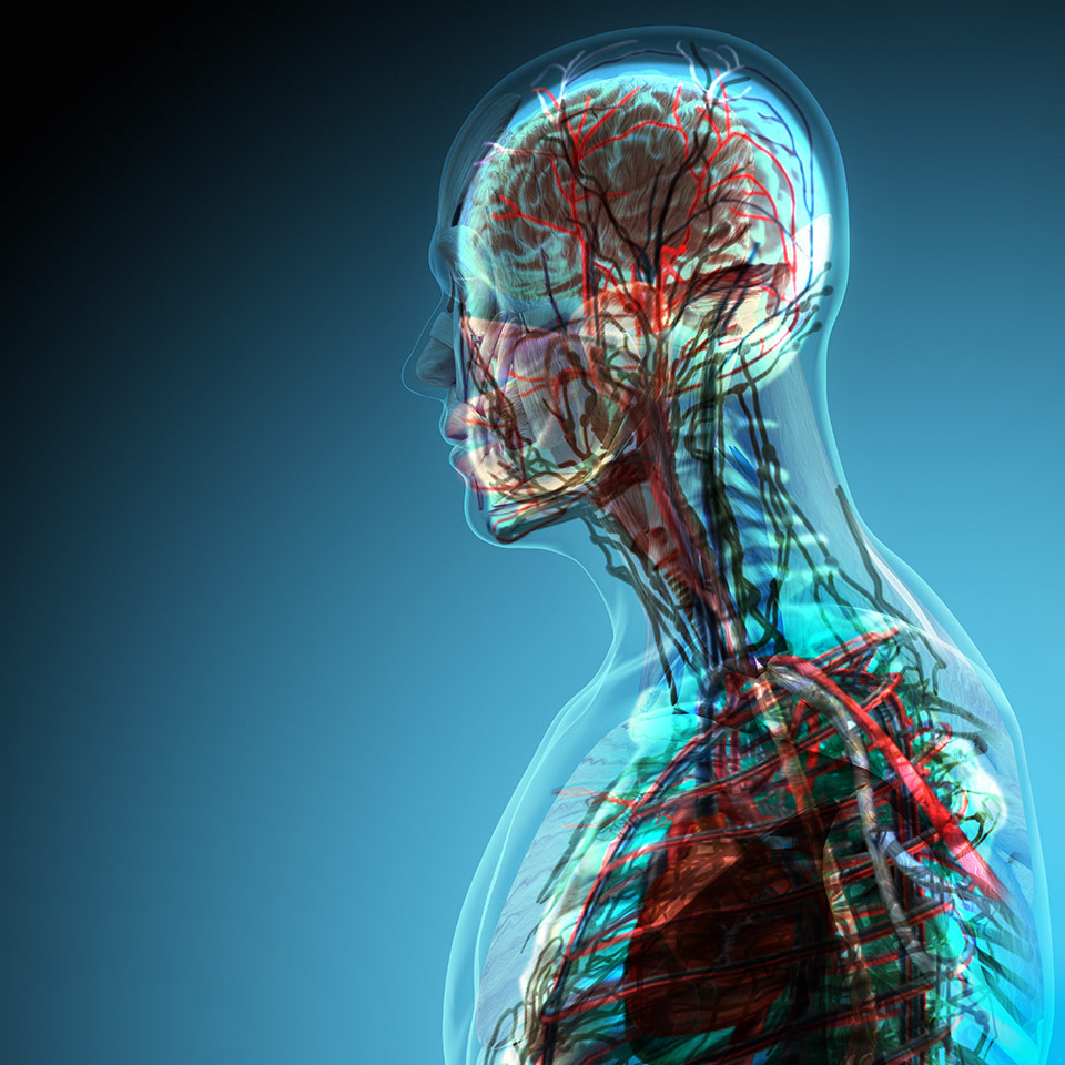 Anatomy And Physiology Level 3 Accredited Distance Learning